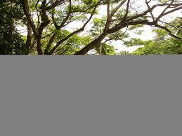 File McBryde Garden Kauai Hawaii stream view JPG Wikimedia