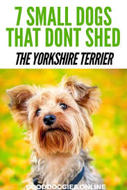 Dogs That Dont Shed Hair Ireland by 792 Best The Best Of Pinterest Pet Bloggers Images On Pinterest