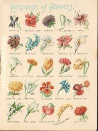 150 best [ flowers ] their language images on Pinterest