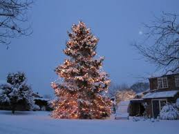 Fixing Christmas Tree Lights In Series by Couple Plant Christmas Tree In 1978 Outside Their Home U2013 It Has