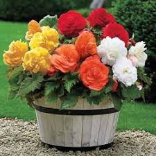 buy flower bulbs at michigan bulb
