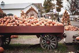 Pumpkin Patch Fort Worth Tx 2014 by Fall Festivals And Pumpkin Patches It U0027s Fall Y U0027all Greater