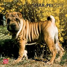 Do Shar Peis Shed A Lot by 7 Best Dog Breeds Shar Pei Images On Pinterest Dogs Puppys And