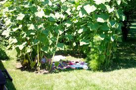 Bring Blessing Summer Sunflower House