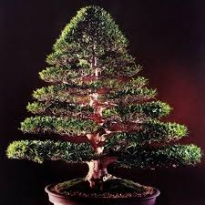 Extremely Creative Bonsai Christmas Tree Decorations Martha Stewart Lights Gift Style Merry