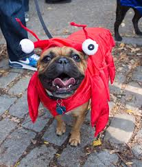 Tompkins Square Park Halloween Dog Parade 2015 by Halloween Dog Parade U2013 Paradoxoff Planet