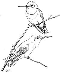 Click To See Printable Version Of Two Ruby Throated Hummingbirds Coloring Page
