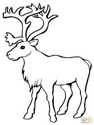 Reindeer Antlers Coloring Sheets Deer Head Pages Printable Click Caribou