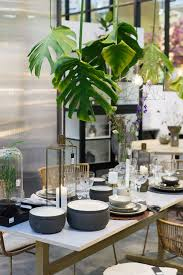 jungle trend fürs zuhause pflanzen deko der