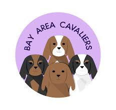 Pumpkin Patches Santa Cruz Area by Bay Area Cavaliers Cav O Ween Pumpkin Patch Pawty Bay Area
