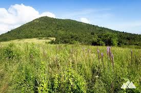 Sam s Knob Trail Asheville Trails