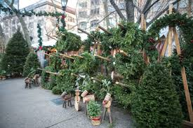 Fraser Fir Christmas Trees For Sale by A Peek Behind The Curtain At New York U0027s Christmas Tree Trade