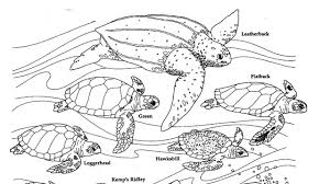 Illustration Of Turtles To Color