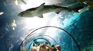 Galveston Moody Gardens Aquarium Grand Reveal Celebration  The