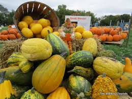 Pumpkin Patch In Colorado Springs Co 2013 by Franklin County Iowa U0027combines U0027 Agriculture And Attractions Into