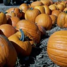 The Great Pumpkin Patch Pueblo Colorado by Colorado Springs Co Hulafrog Browse Businesses Places Other