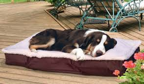 Drs Foster And Smith Dog Beds by Deluxe Dog Beds Dog Beds You Ll Love Wayfair Waterproof Dog Beds