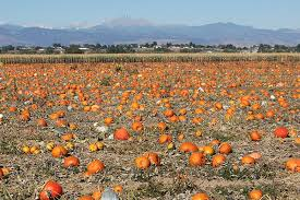 Best Pumpkin Patch Near Roseville Ca by Home Anderson Farmsanderson Farms