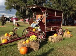 Pumpkin Patch In Colorado Springs Co 2013 by Hunsader Farms Pumpkin Festival Is Perfect Fall Fun In Florida