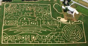 Woodside Pumpkin Festival fall events on dairy farms that you don u0027t want to miss dairy spot