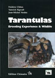 Pumpkin Patch Tarantula For Sale by Dave The Bug Guy