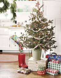 Inspiration Christmas Trees In The Kitchen