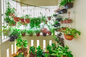 wohntrend jungle zuhause bei sam