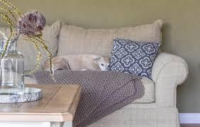 mein wohnzimmer tolle sofas und die 5 minuten hunde mrs