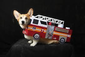 Dog Truck Costume | Www.topsimages.com