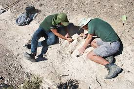 Tule Springs Fossil Beds by Digging Up Mammoth Fossils News Center University Of Nevada