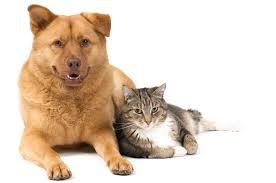 Microchip Your Pet