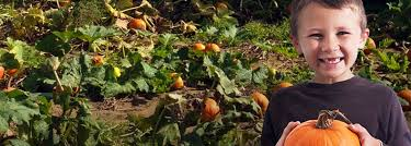 Local Pumpkin Farms In Nj by Pumpkin Picking Pumpkin Patch Nj Farms View Farm