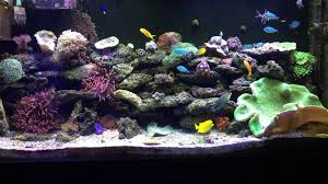 Star Wars Fish Tank Decorations by Ian U0027s 60 Gallon Saltwater Reef Aquarium Corals Fish Anemones