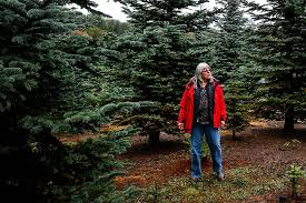 Christmas Tree Cutting Permits Colorado Springs by Definitely Not Christmas In July For Parched Young Trees