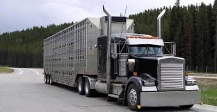 More Help Sought For Livestock Haulers | Farm Futures Second Hand Trucks For Sale With Great Cpklets Help You Start Pge Unveils New Plugin Electric Truck That Will Help Keep The Dalo Is St Louis Missouri Home For Truck Accsories We Help California Trucking News Blog Truckstop Heroes Convoy Dunstable 10062017 Flickr Inc Roadside Assistance Disaster Relief Logistics Humitarian Food To Stem Senior Hunger In Diocese Of Oakland Franklin Lakes Nj Unveil Two Fire Trucks Apparatus What Makes The Ford F150 Best Selling Pick Up In Canada Humane Officers Acquire Large Animal Rescue