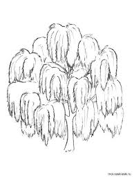 Willow Tree Coloring Pages 3