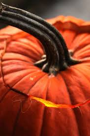 Hartsburg Pumpkin Festival 2013 Dates by 141 Best Autumn Halloween Styled Images On Pinterest Fall