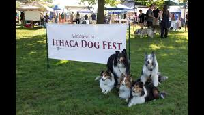 Bed And Biscuit Ithaca by Life Is Ruff At Annual Ithaca Dog Fest The Ithacan