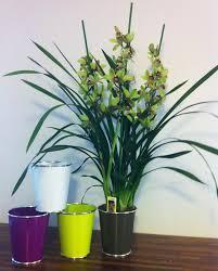 l orchidée du mois globe déco