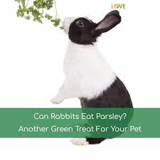 Can Rabbits Eat Roasted Pumpkin Seeds by Can Rabbits Eat Watermelon A Summer Treat For Rabbits Jan 2018
