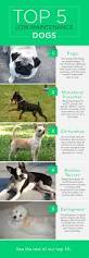 Non Shedding Dog Breeds Kid Friendly by The Top 10 Low Maintenance Dogs Care Com Community