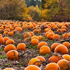 Real Pumpkin Patch Dfw by Top 10 Fall Festivals In The Charlotte Area Live Love Homes