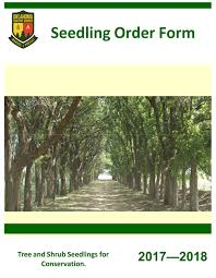 Christmas Tree Saplings For Sale by Order Seedlings Oklahoma Forestry Services