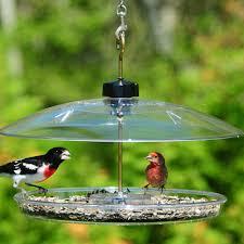 Amazon Droll Yankees Bird Feeder Platform Cardinal Bird