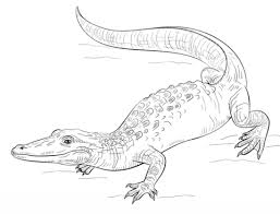 Click To See Printable Version Of Realistic Alligator Coloring Page