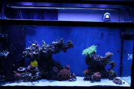 IMG] | Reef Aquascape | Pinterest | Aquascaping 75 Gallon Tank Aquascape Ideas Please Reef Central Online Community Minimalist Aquascaping Page 3 2reef Saltwater And How To A Aquarium Youtube Tank Rockscape To Drill Cement Your Live Rock Gmacreef Columns In A Saltwater Callorecom Pieter Van Suijlekoms Revisited Is There Science Live Rock Sanctuary The Why I Involuntarily Redid My Mr 7