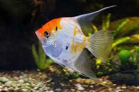 poisson eau douce aquarium tropical materiel d aquariophilie 13001 sarl tropical poisson