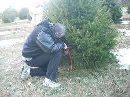 Christmas Tree Shop Freehold New Jersey by Christmas Trees New Jersey Christmas Lights Decoration
