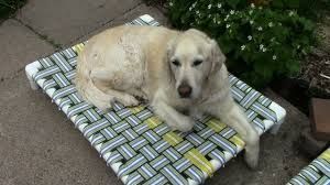 how to make a raised dog bed with pvc and nylon webbing
