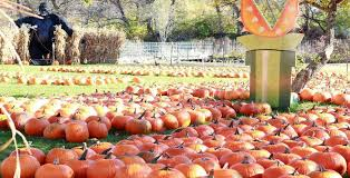 Pumpkin Patch Bend Oregon 2015 by Meadowbrookfun Farm U0026 Market